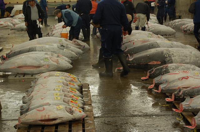 Thunfisch-Verkauf bald transparent? (Deadly Tedly, CC BY-NC-SA 2.0)